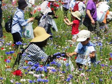 来場者は畑の中に入って好きな花を自由に摘むことができる