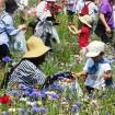 葛西臨海公園で「ポピーのお花摘み」を5月23日(土)、24日(日)に開催 参加費無料・花は持ち帰り自由