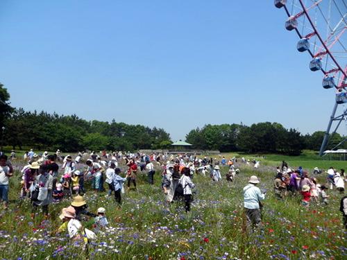 開催場所は芝生広場の大規模花壇。事前の申込みは不要で直接集合