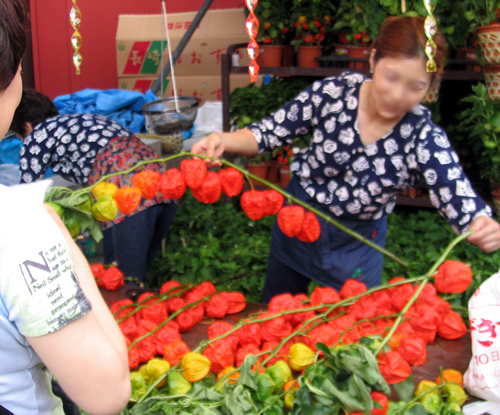 江戸の初夏の風物詩「浅草寺 ほおずき市」が7月9日、10日に開催 境内に約100の露店が並ぶ
