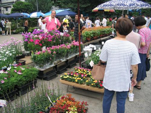 初夏の園芸も販売
