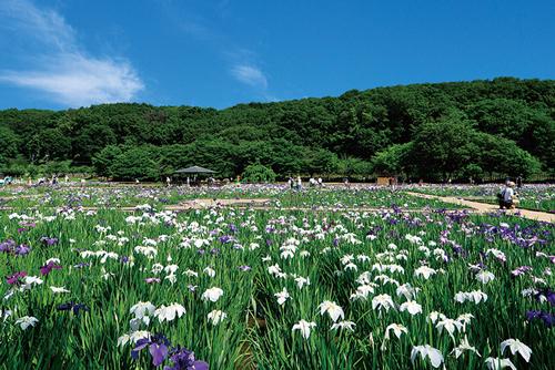 新東京百景にも選ばれた多くの野草が自生するスポット