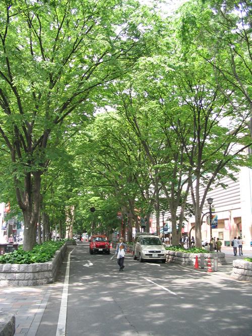 府中市の「馬場大門けやき並木」