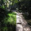 東京の穴場観光スポット1位にも選ばれた世田谷の「等々力渓谷」とは