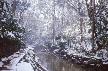 雪に覆われた「等々力渓谷」