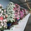 初夏を彩る上野の皐月展 「さつきフェスティバル2015」 が5月27日から6月1日に開催