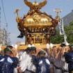 江戸三大祭りの一つ「深川八幡祭り(富岡八幡宮例祭)」が2015年8月13日~8月16日に開催