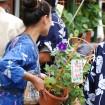 日本最大の朝顔市「入谷朝顔まつり」が2015年7月6日(月)~8日(水)に入谷鬼子母神と言問通りで開催