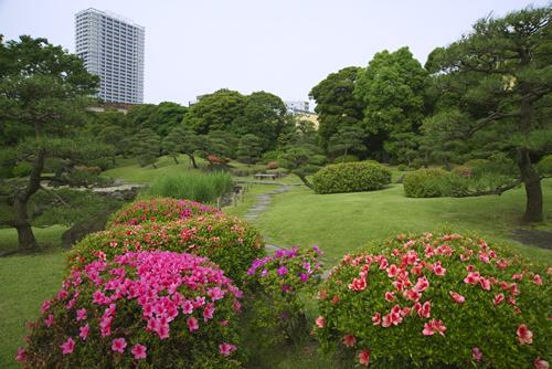 旧芝離宮恩賜庭園 夏の風景