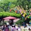 夏を彩る花々の旧芝離宮恩賜庭園で「七夕演奏会」を2015年7月4日(土)に開催