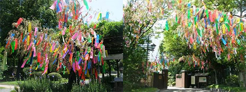 七夕飾りで彩られた旧芝離宮恩賜庭園