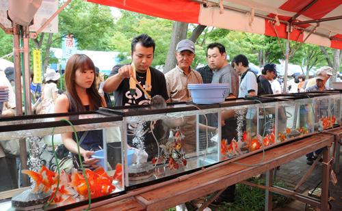 一日500匹限定の「高級金魚すくい」も実施