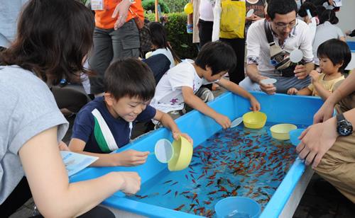 「金魚すくい」は2日間で20,000匹もの金魚を用意