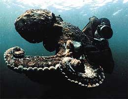 ワンダー・フィルム・フェスティバル(海の映像上映会) 映像作品「タコの驚異」