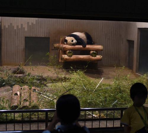 「東園・夜に室内で眠るジャイアントパンダ」
