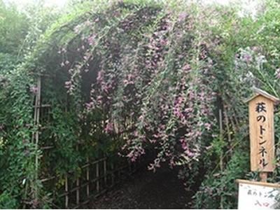 「萩のトンネル」