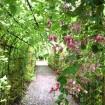 向島百花園「萩まつり」と「萩のトンネル」