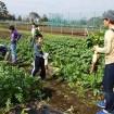 あきる野市の農園で「ダイコンづくり体験」の参加者募集!(種まきから収穫まで全4回)