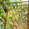 色鮮やかな江戸風鈴と短冊の回廊をくぐろう!「川越氷川神社 縁むすび風鈴」が8月31日まで開催