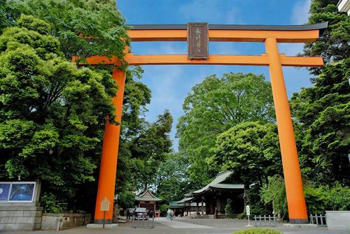 境内の入り口に大きくそびえたつ高さ約15mの大鳥居は、木製の鳥居としては日本一の大きさを誇る