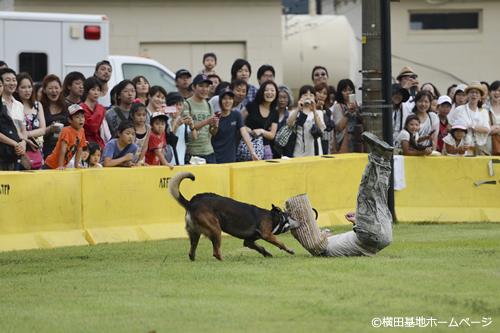 軍用犬によるデモンストレーション 泥棒役を追い詰める
