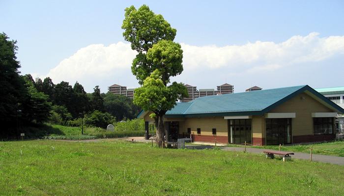 多摩丘陵の雑木林で覆われた小山内裏公園