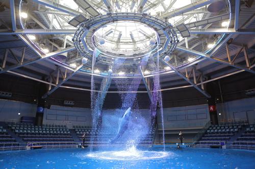 360度どこからでも楽しめる直径約25mの円形プール「ザ スタジアム」の「ドルフィンパフォーマンス」。写真は昼間おこなわれる「Oooooh!」(デイバージョン)