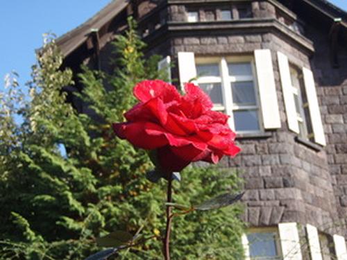 秋のバラは香りや色彩を長い期間楽しめるのが特徴