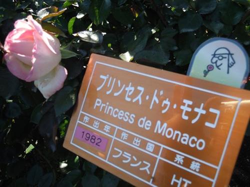 品種名ラベル板の右上にマークが付いていているものが「香りが楽しめるバラ」