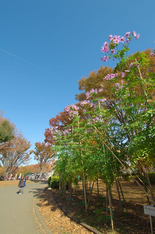 秋の小金井公園の風景