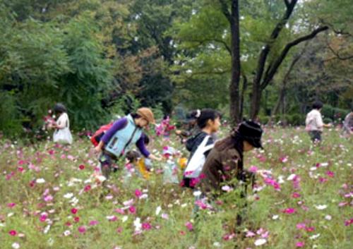 こどもの広場大規模花壇に咲くコスモスの花摘み体験 摘んだ花は持ち帰ることができる