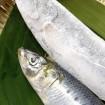 ドローンや瞬間冷凍など日本が「世界に誇る食の技術展」を10/14(水)~12/13(日)に北青山のTEPIA先端技術館で