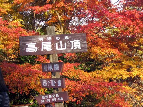 都内随一の紅葉狩りが楽しめる高尾山