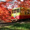 東京随一の紅葉を鑑賞!「高尾山もみじまつり2015」が11月1日(日)から30日(月)まで開催