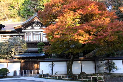 高尾山で育った600年杉を使用した総杉造りの書院