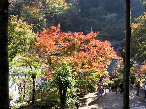 秋の景色を楽しみながらのんびり歩こう
