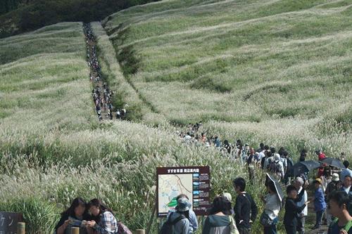 箱根の秋の風物詩、仙石原のすすき草原
