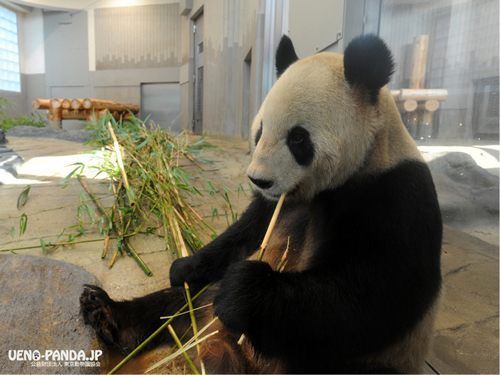 パンダの日は10月28日