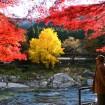 大銀杏のライトアップも!青梅・御岳渓谷にて「みたけ渓谷秋色まつり」が2015/10/24(土)~11/29(月)に