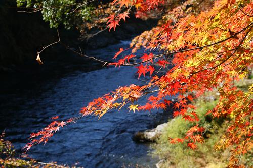 銘木玉堂美術館の大銀杏をはじめ渓谷を彩る紅葉を眺めて川べりを行く