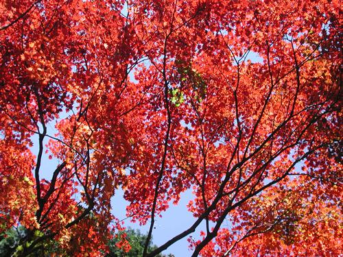 見事な紅葉を楽しめる