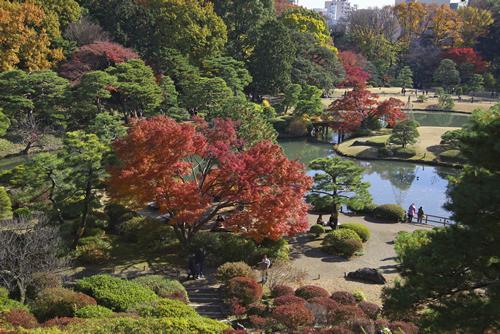 園内では落ち着いた秋の佇まいと艶やかな紅葉が楽しめる