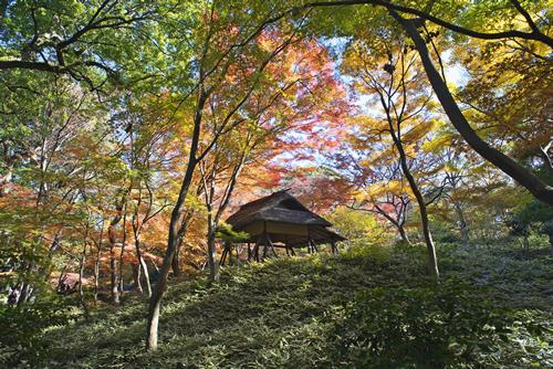 明治年間、岩崎氏の代につつじの古木材を用いて建てられた「つつじ茶屋」