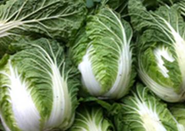 新潟の新鮮野菜がいっぱい