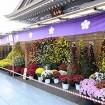 約2千株の菊を展示!「第37回 湯島天神 菊まつり2015」が11/1(日)~11/23(月・祝)に開催