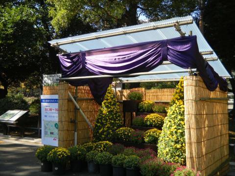 約2,000点の菊を展示!「東京都観光菊花大会」が2015年11月1日(日)~23日(月・祝)に開催
