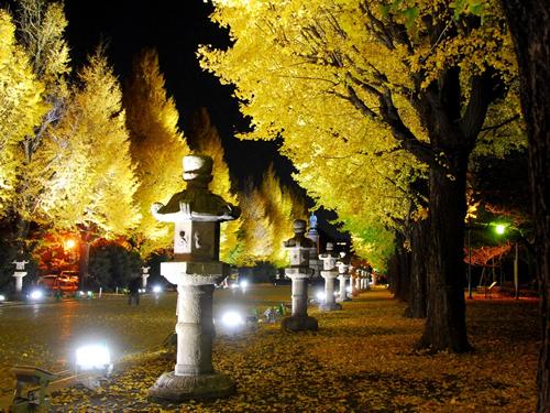 靖國神社参道の大鳥居から本殿まで約500m、左右34本イチョウの並木道を黄金色にライティング