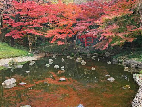 いよいよ480本のモミジが見ごろに!小石川後楽園で「深山紅葉を楽しむ」が11/21(土)~12/6(日)
