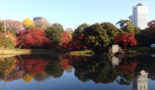 小石川後楽園 紅葉の様子