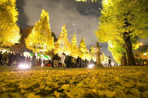 靖國神社参道の大鳥居から本殿まで約500m、左右34本イチョウの並木道を黄金色にライトアップ